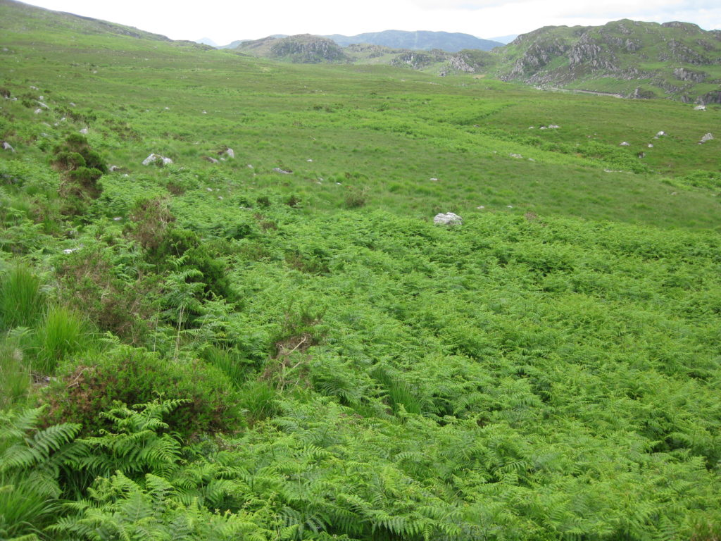 Uncontrolled Bracken (ferns)